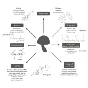 Mycothérapie Hifas da Terra